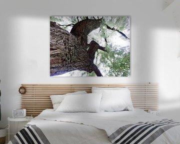 Tree Magic 61 van MoArt (Maurice Heuts)