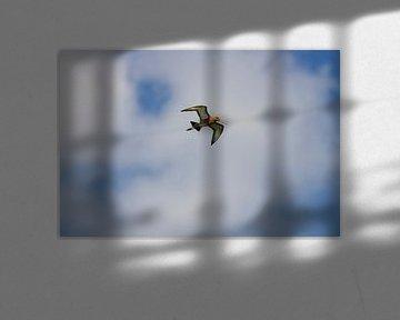 De sjongende skries (De zingende grutto.) van Remco de Vries