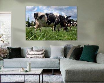 Kühe in der Weide sur Jan Sportel Photography
