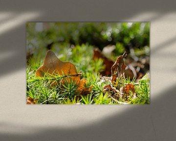 herfst stilte van Tjiske Regnerus