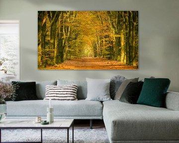 Pad in een herfst bos von Sjoerd van der Wal
