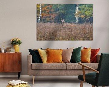 Herfst op de Veluwe von Roy Zonnenberg
