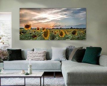 Sunflowersunset van Reint van Wijk