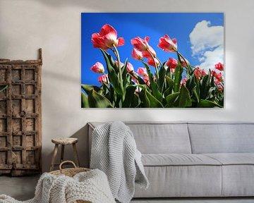 Tulpen in de wind van Saskia Hoks