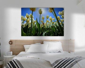 Witte tulpen van Saskia Hoks