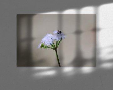 Lila bloem met insect von Maurits Kuiper