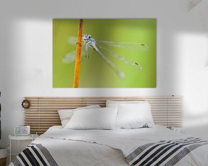 Sfeerimpressie: Gewone pantserjuffer (Lestes sponsa) op rietstengel van Caroline Piek