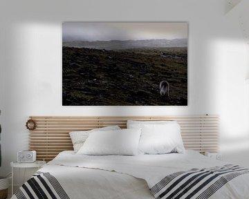 IJsland - Poolvos von Willem van den Berge