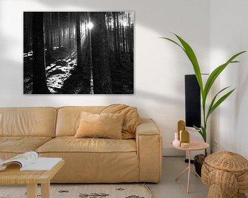 Zonlicht schijnt door de bomen von Patsy Van den Broeck