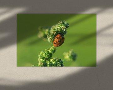 Lieveheersbeestje van Martien Wassink