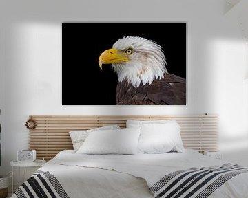 Close up kop van zeearend op zwarte achtergrond van Ben Schonewille