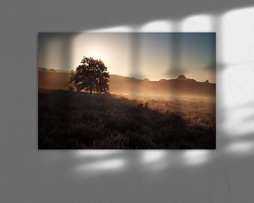 beautiful gold misty sunrise on hills van Olha Rohulya
