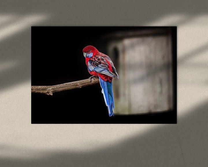 Impression: Roodblauwe Rosella papegaai sur Harrie Muis