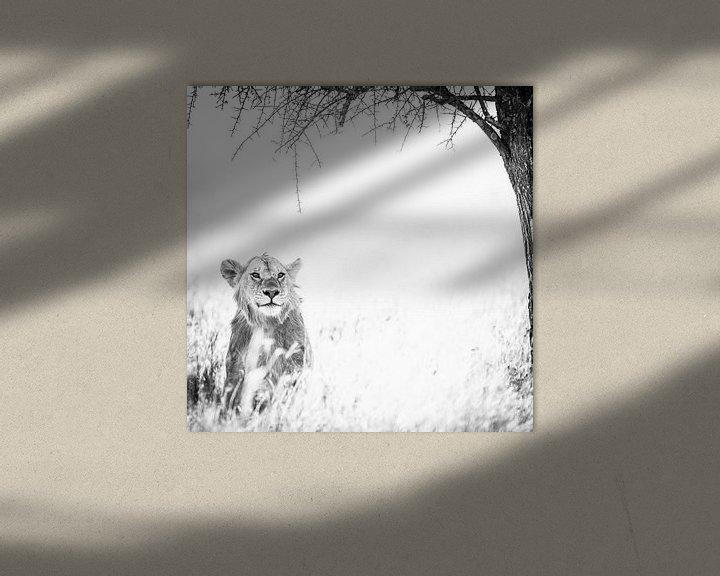 Sfeerimpressie: Lioness under the tree. van Leon van der Velden