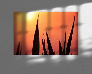 Gras in de opkomende zon von Arno Wolsink