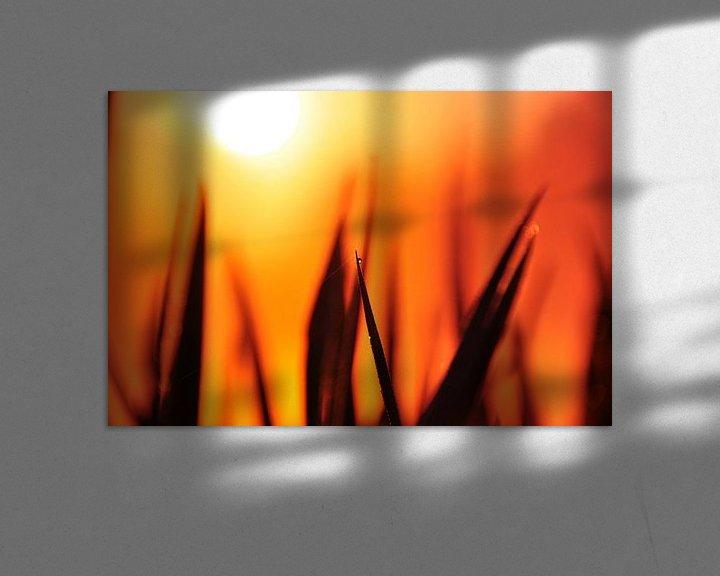 Sfeerimpressie: Gras in de opkomende zon van Arno Wolsink