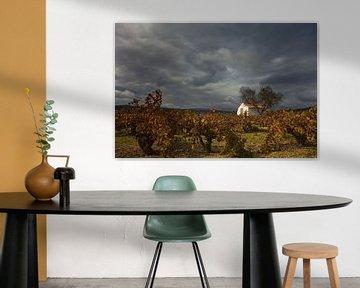 Wijngaard en huisje, Costa Blanca, Spanje van Peter Bolman