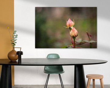 Twee rozenknoppen von Petra Brouwer