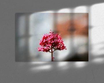 The central pink flower van Petra Brouwer