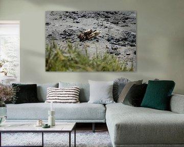 Krab van Onno van Kuik