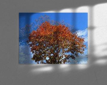 Tree Magic 68 van MoArt (Maurice Heuts)