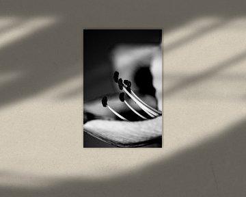 Stampers in Amarylis in low key zwart wit van Mariska van Vondelen