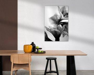 Amarylissen geschulpte rand zwart wit stilleven von Mariska van Vondelen