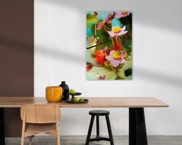 Japanse anemoon, bloemen tussen de knoppen van Mariska van Vondelen