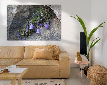 onder een afdakje, bloemetjes op een rots in Oostenrijk van de buurtfotograaf Leontien