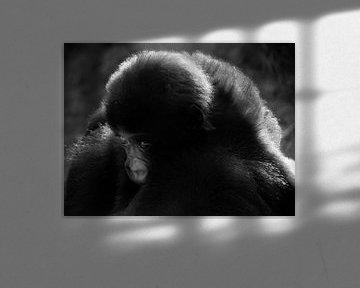 Kleine aap von Adri Vriens