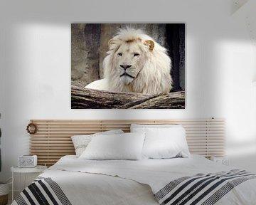 Witte leeuw von Adri Vriens
