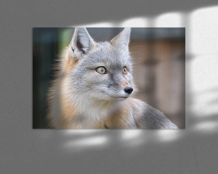 Beispiel: Steppen vos / steppe fox von Pascal Engelbarts