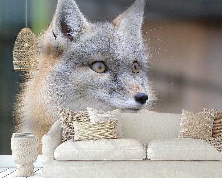 Beispiel fototapete: Steppen vos / steppe fox von Pascal Engelbarts