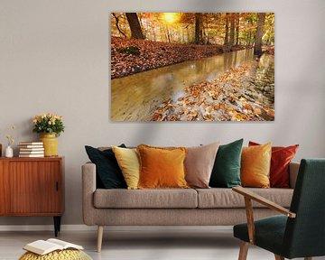 Herfst in het Leuvenumse Bos van Rob Kints