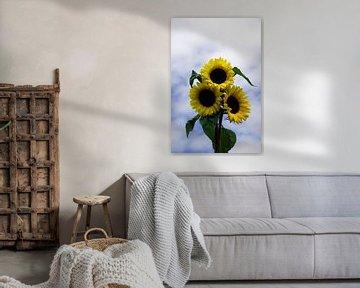 three sunflowers von Compuinfoto .