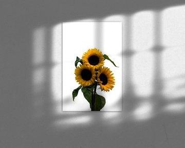 gele zonnebloemen von Compuinfoto .