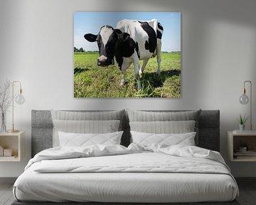 zwartbonte koe in een weiland von Compuinfoto .