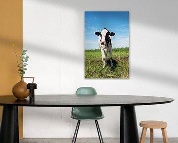 jonge koe in het veld