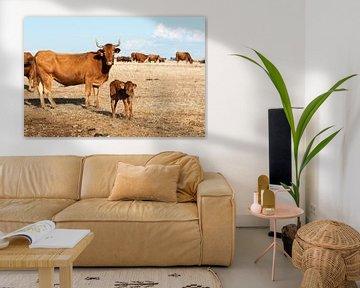 Cows in alentejo field sur Compuinfoto .
