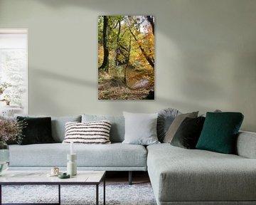 autumn forest in holland   van ChrisWillemsen