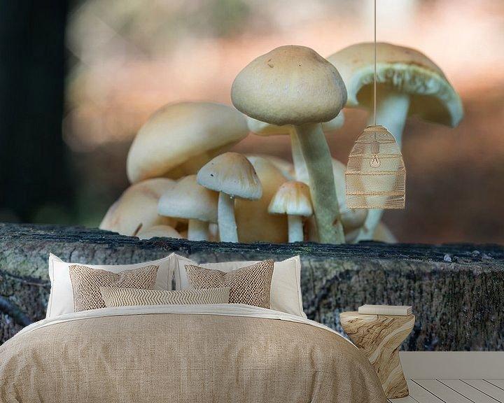 Sfeerimpressie behang: fungus in forest van Compuinfoto .