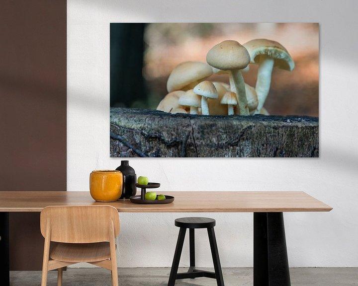 Sfeerimpressie: fungus in forest van Compuinfoto .