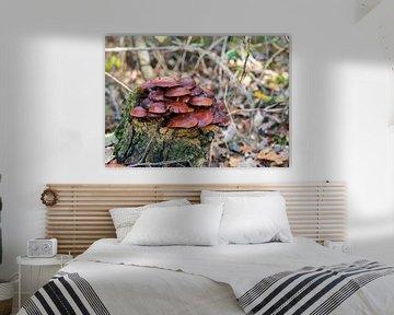 fungus on bark tree