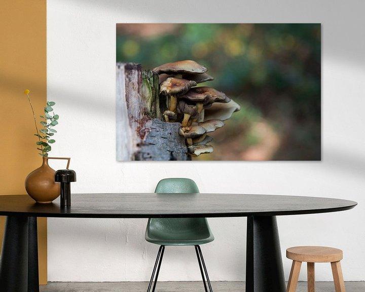 Sfeerimpressie: fungus  van Compuinfoto .