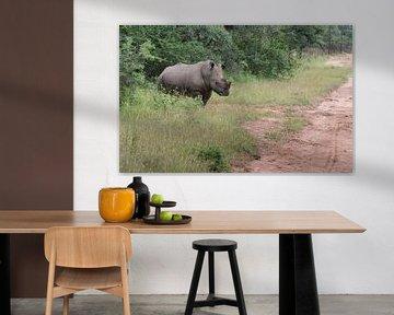 white rhino at the kruger park von Compuinfoto .