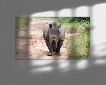white rhino at the kruger park