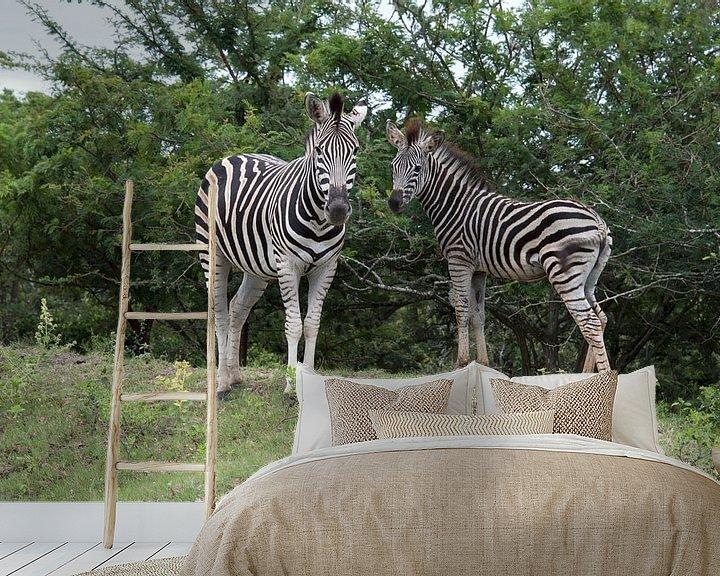 Sfeerimpressie behang: wild zebra in kruger national park van Compuinfoto .