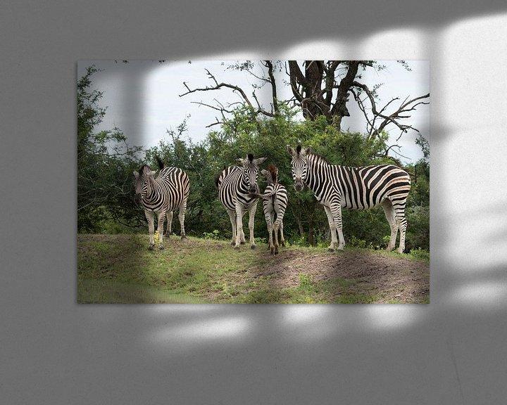 Sfeerimpressie: group of zebras  van Compuinfoto .
