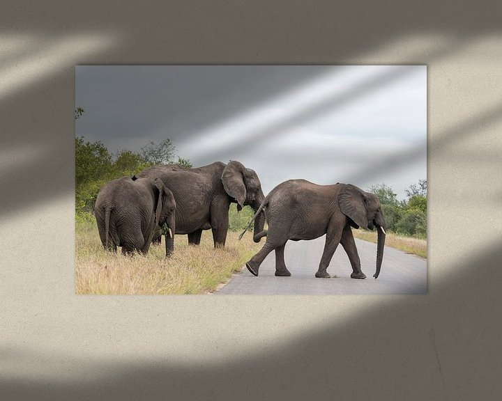 Sfeerimpressie: group elephant in kruger park van Compuinfoto .