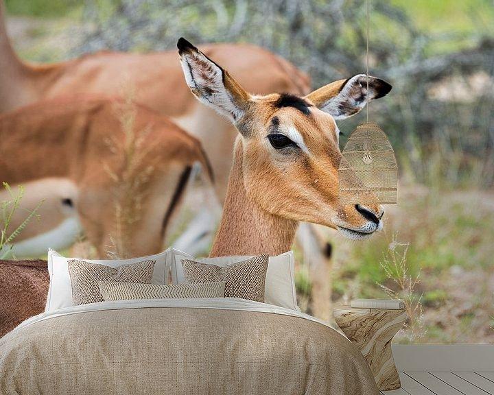 Impression: female impala sur ChrisWillemsen